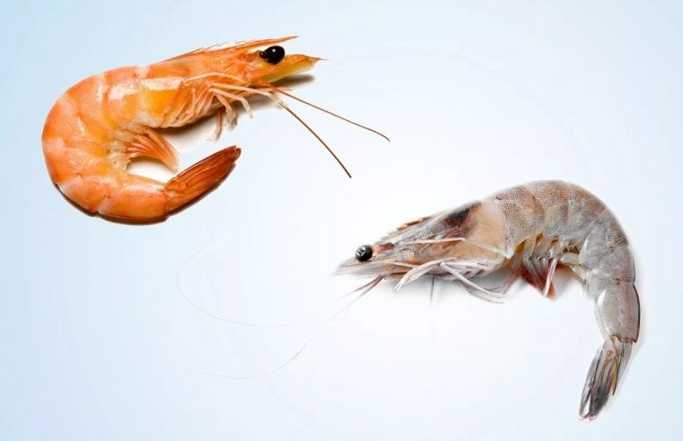 What Is the Difference between Shrimp & Prawns?