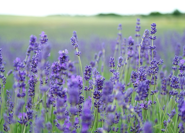 Did you know the benefits of Borage oil?
