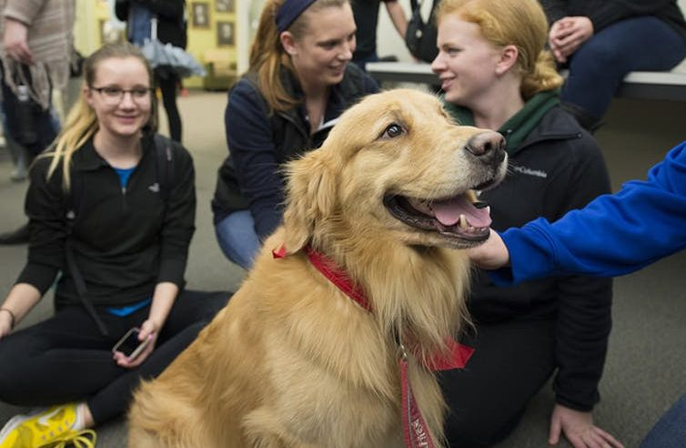 Can therapy dogs improve students' performance?