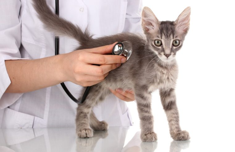 Need to Work with an Experienced Veterinary Attorney