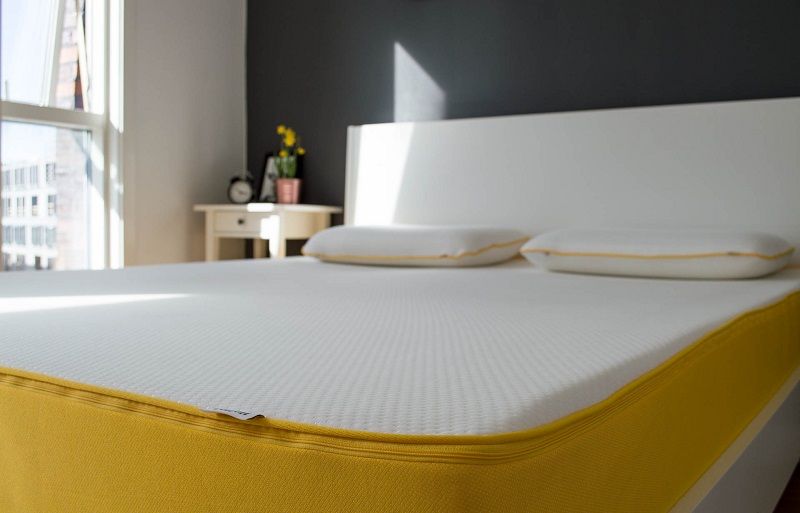 What to do about bed bugs in foam mattresses
