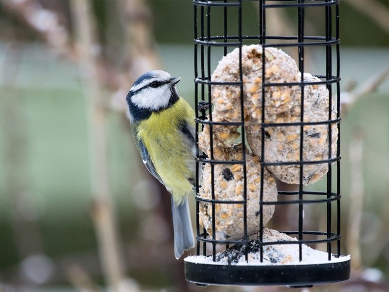 Make the Most of your Winter Garden for the wildlife