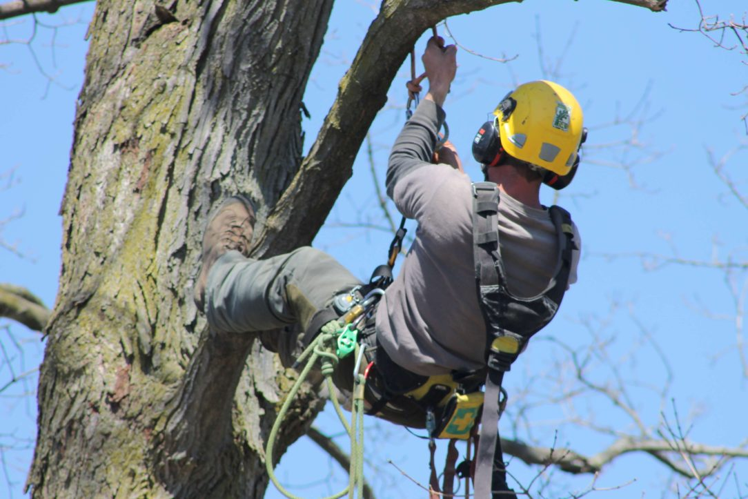 Looking For An Arborist? Consider These factors