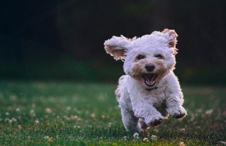 Bucket List: 5 Fun things to Do With Your Dog
