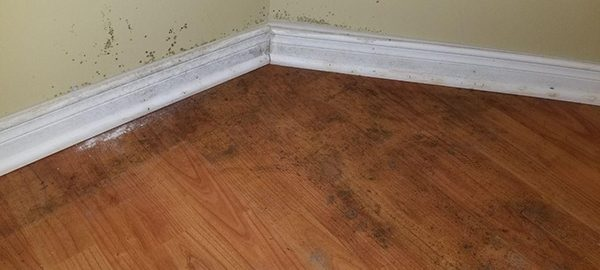 Why Mold Inspection of Your Home is Important?