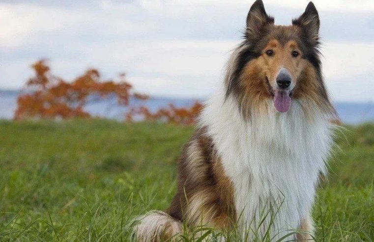 21 Best Outdoor Dogs – Breeds That Thrive Outside