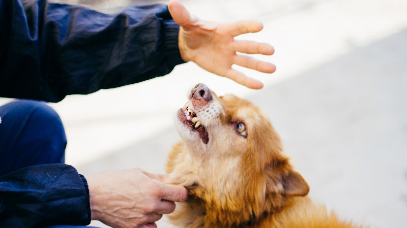 Are You Aware of These Dog Training Education