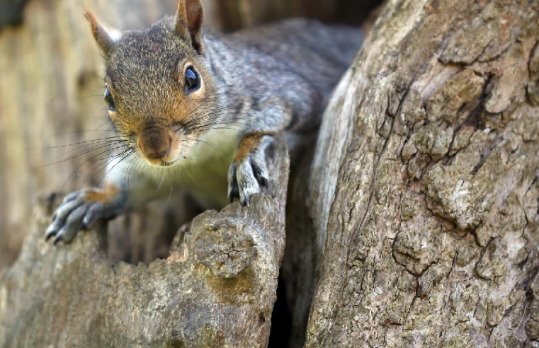 How to keep your home free of squirrels