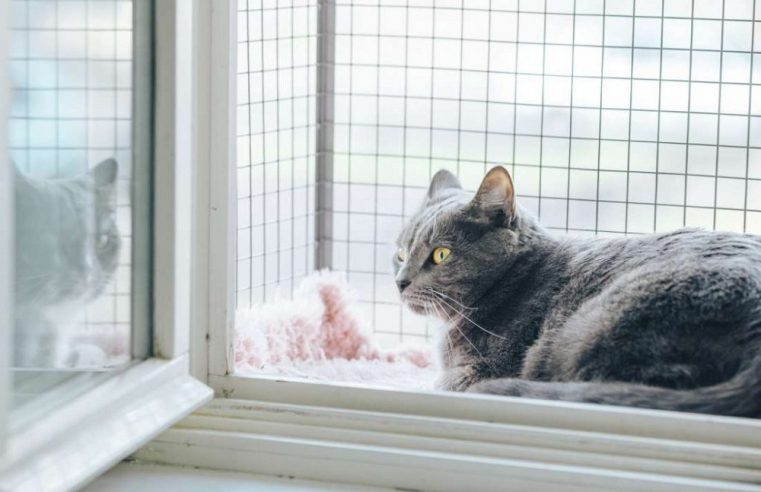 Do Outdoor Cat Enclosures Have Any Definite Importance for Your Cats?