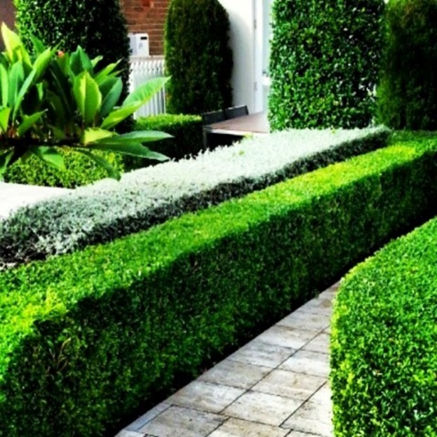 How To Emphasize Your Garden At Home Without Looking Exaggerated? Get These Tips For You
