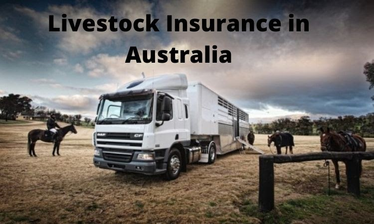 3 Surprising Things About Livestock Insurance + Tips To Buy