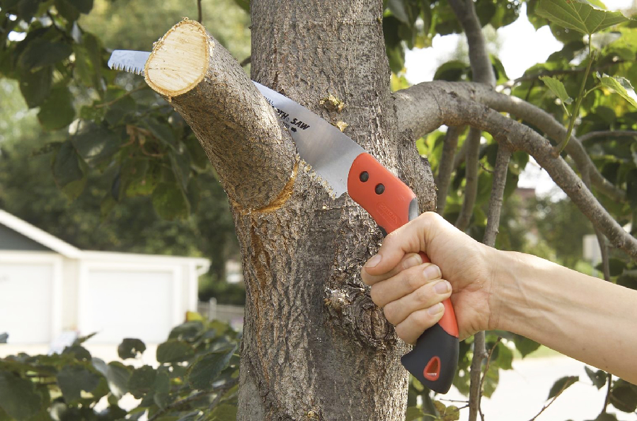 Things to Consider Before Cutting Your Tree
