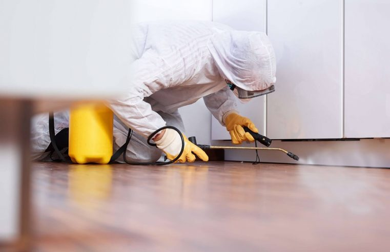 Treatment Of Wooden Furniture To Prevent And Avoid Pests