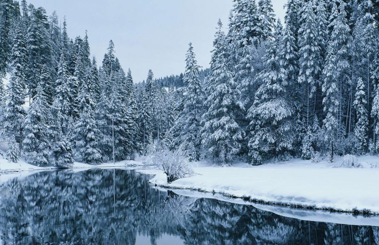 These are the Places to Visit in the Forest this Winter
