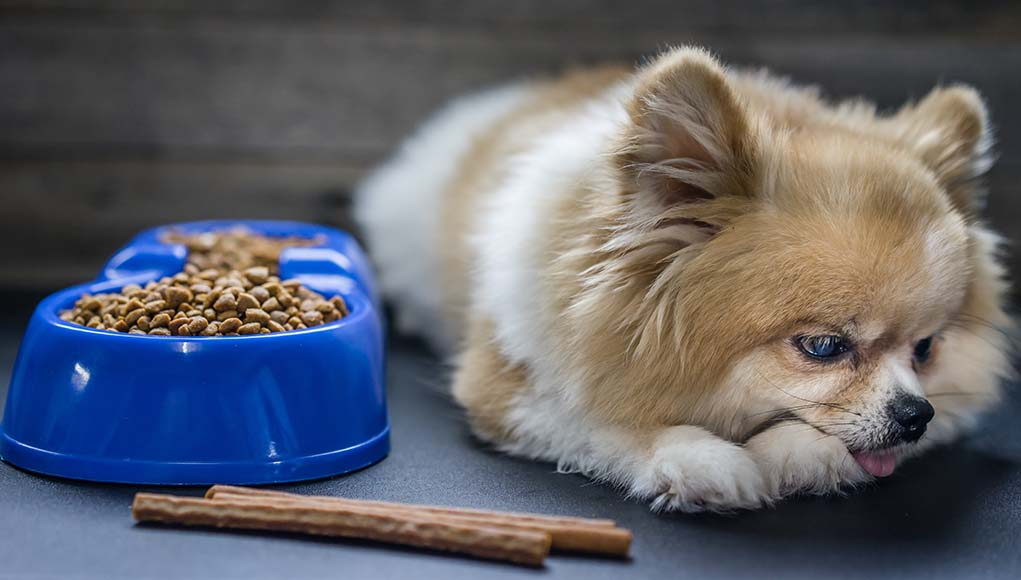 What Is Anorexia In Pets And What You Need To Do About It