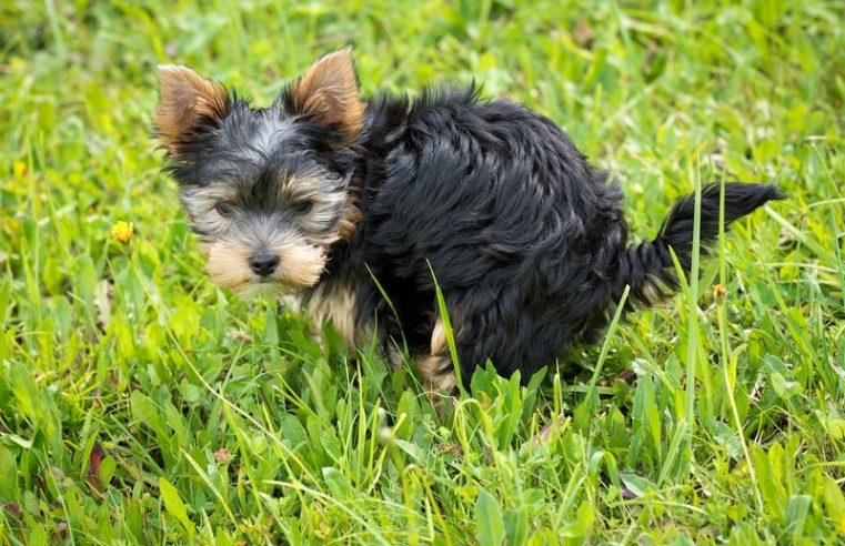 Preventing Children Illness Through Pet Waste Removal