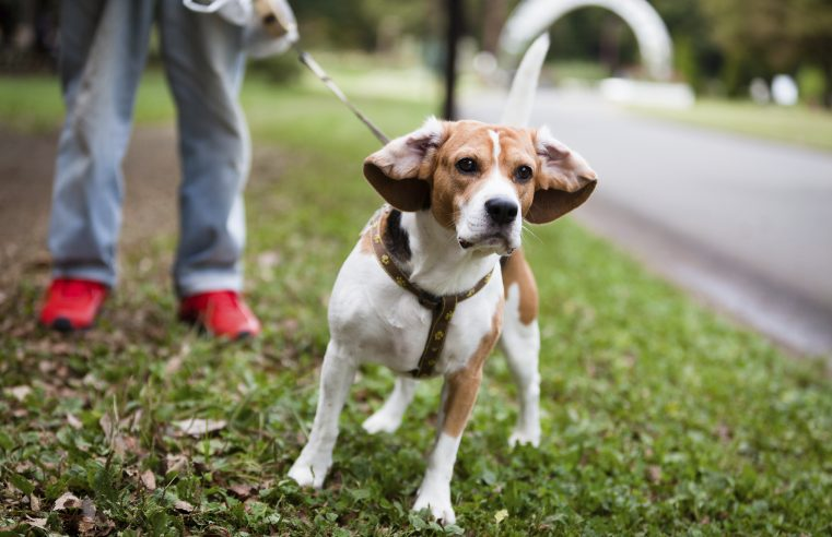 The Importance Of Cleaning Up After Your Dog