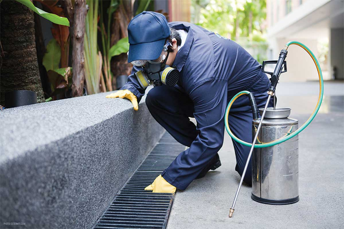How to Maintain Pests Out of Your Manufacturing Facility