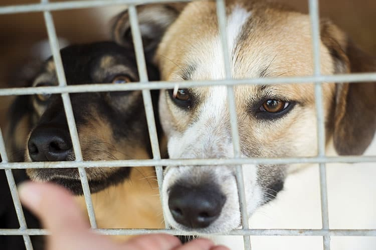 Tips on Inspecting a Kennel at Dog Boarding Centres