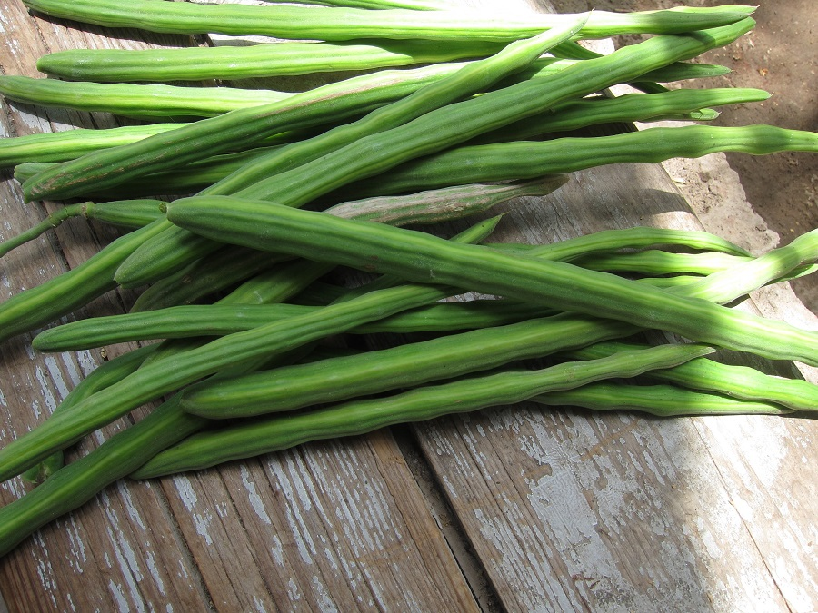 What Are The Health Benefits Of Drumstick?