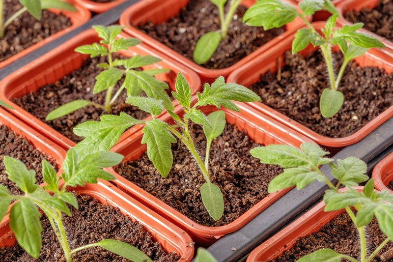 Understanding The Best Conditions For Seedlings