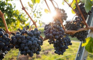 Organic versus biodynamic wine: similarities, differences, and everything in between