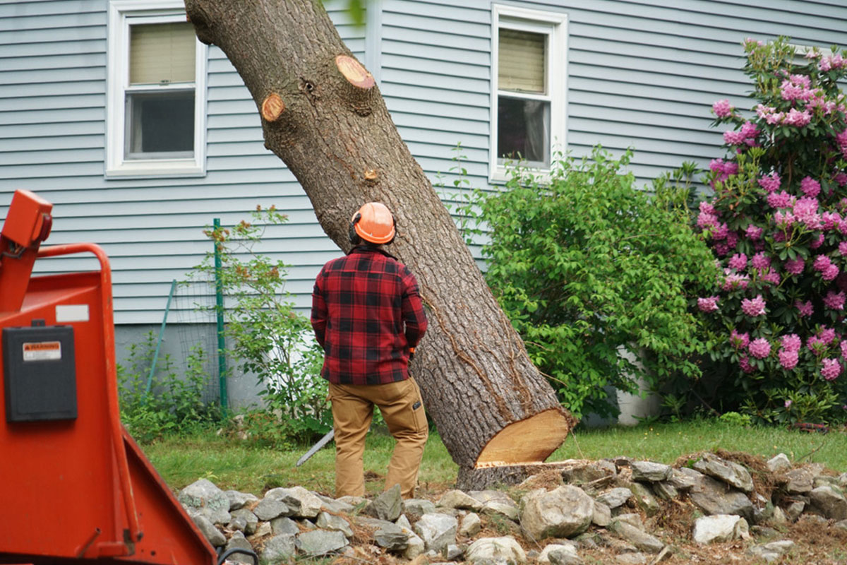 How much does it cost to cut down a large tree?