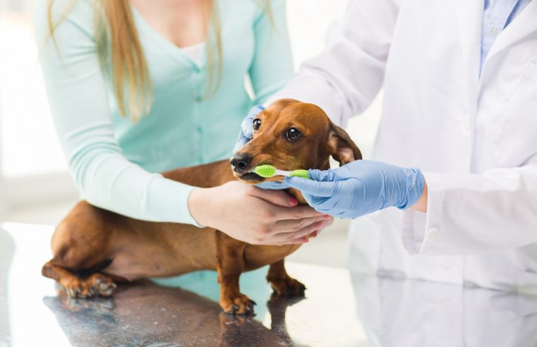 What to Expect with a Pet Dental Cleaning