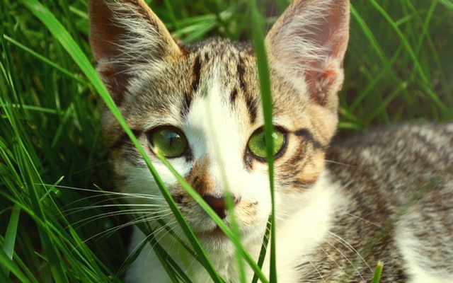A Photography Guide On Taking Better Pictures Of Your Cat!