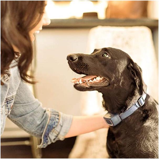 How Does The Bark Collar Work?