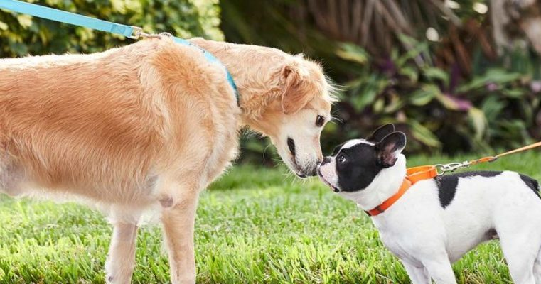 What is Dog Socialization?