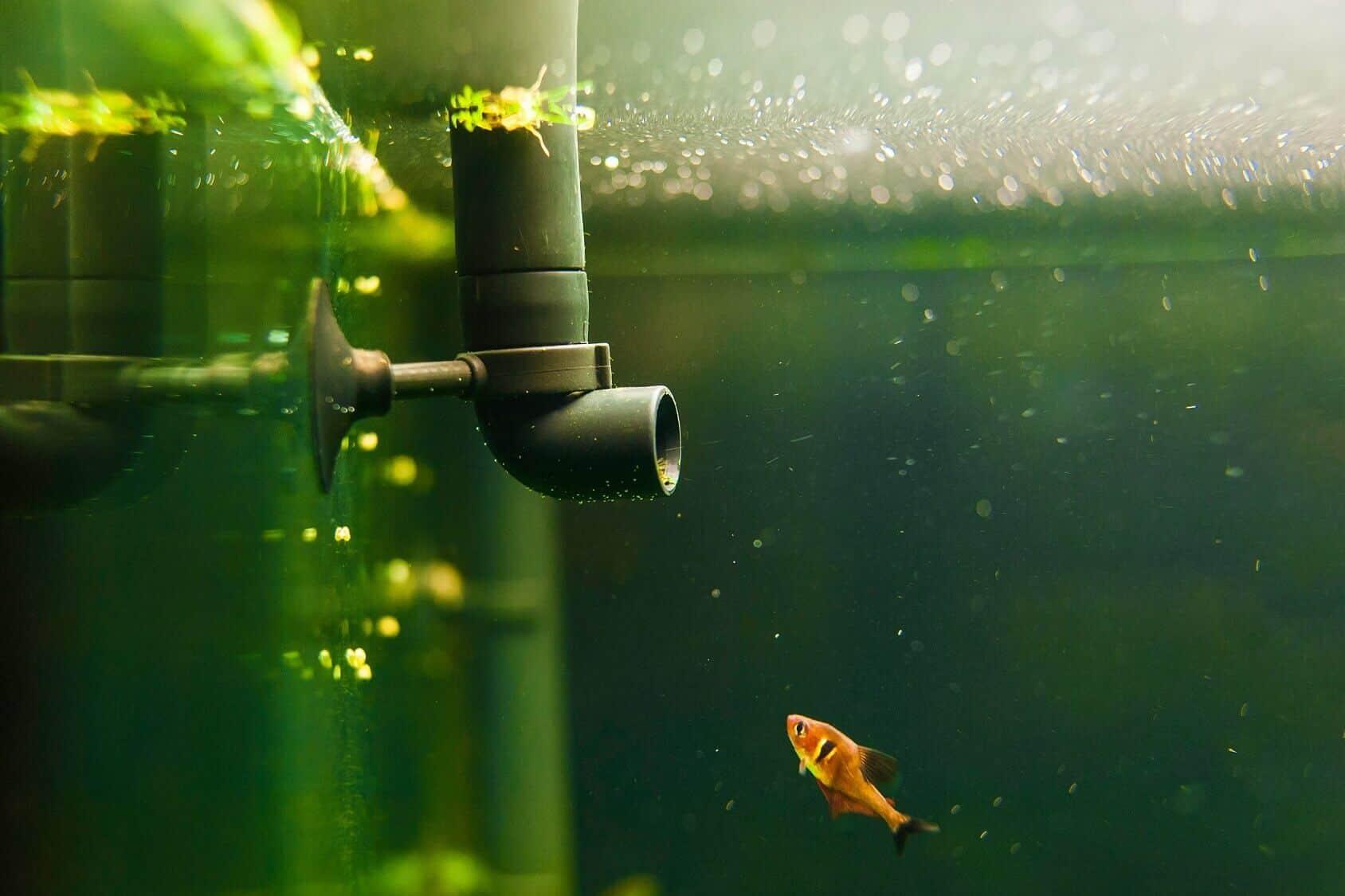5 Key Features of Effective Submersible Aquarium Pump