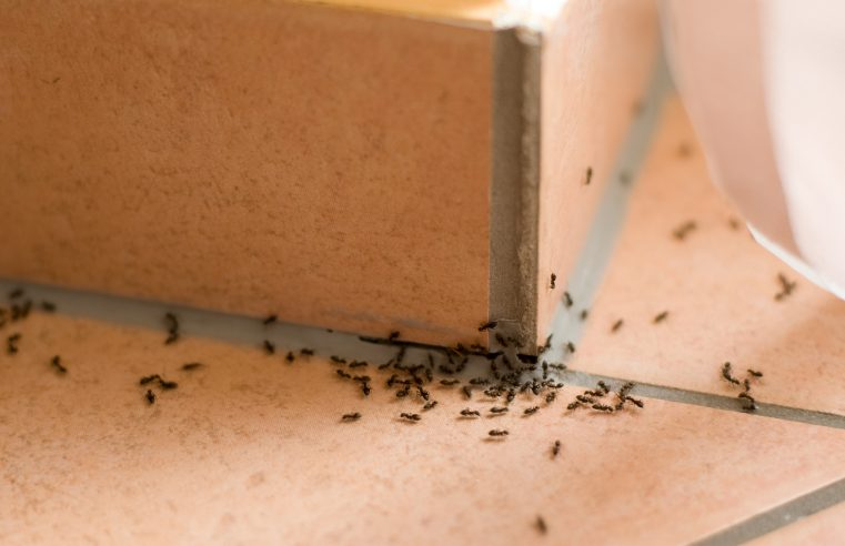 Getting rid of Ants