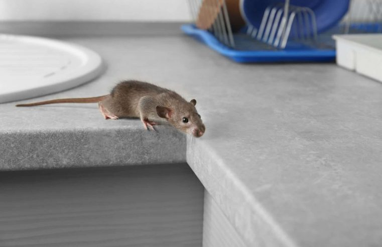 How do professionals get rid of rats?