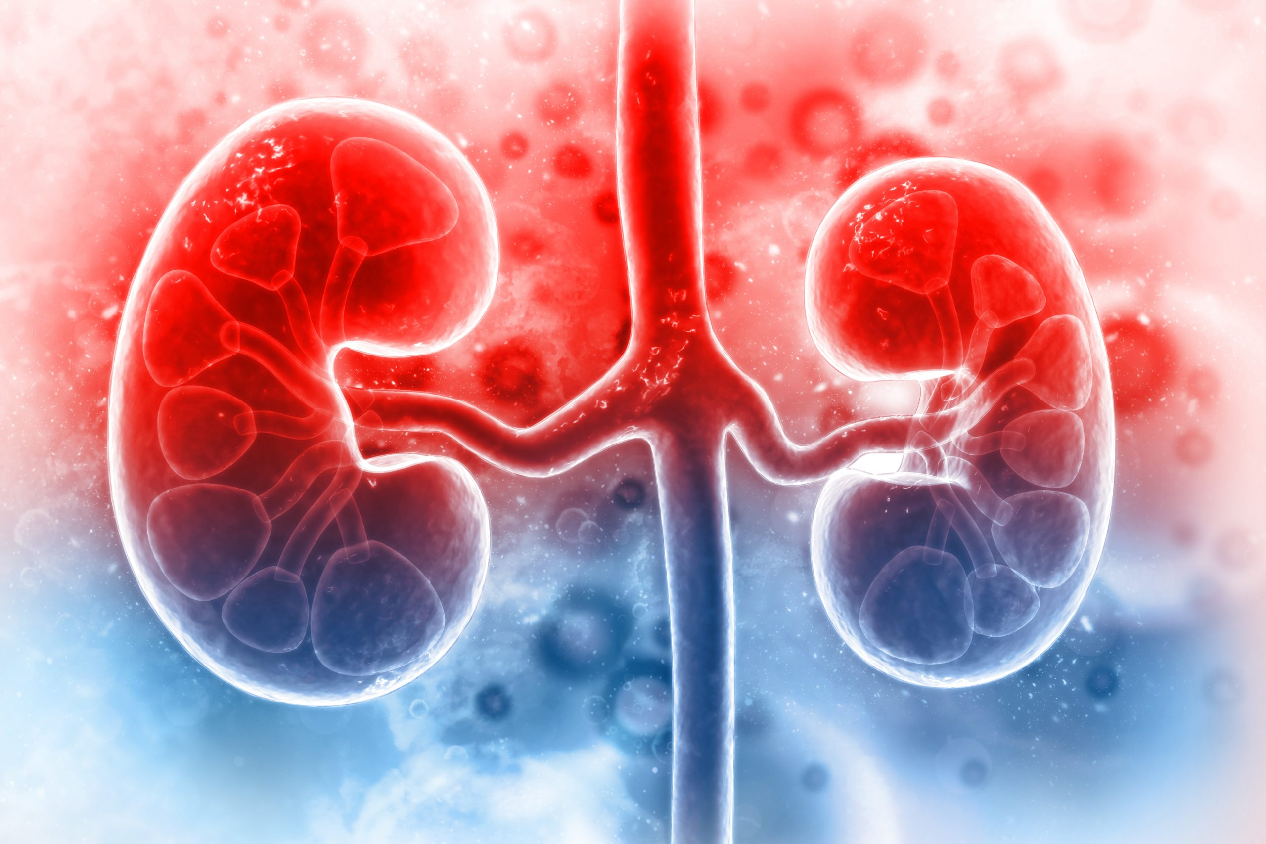 Tips to Restore the Excellent Functioning of Your Kidneys