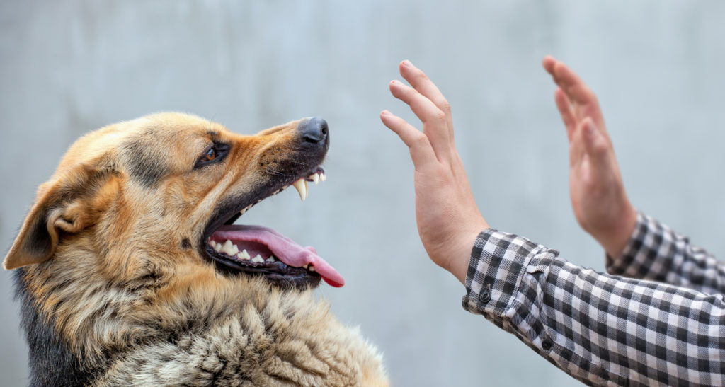 You May Need An Animal Injury Attorney