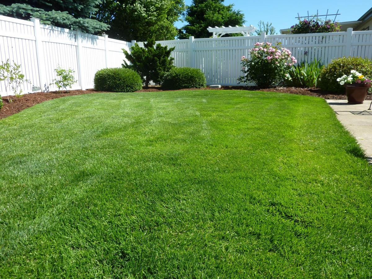 Why Organic Lawn Care Services Are Better For Your Lawn, Children, Pets, Wallet, and the Environment