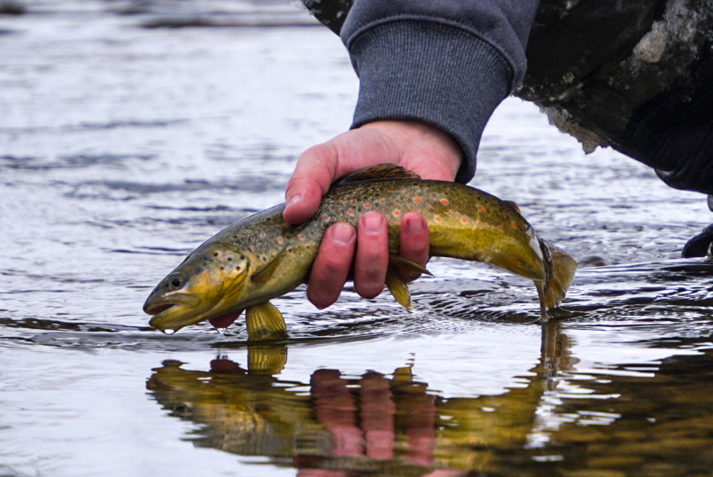 A Fly-Fishing Guide Can Make Your Fishing Experience Unforgettable