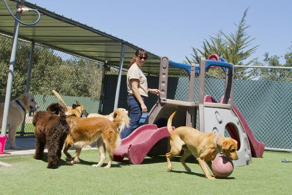 Important tips for choosing the best dog daycare