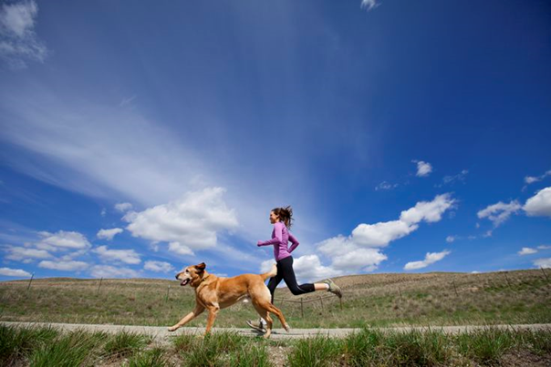 Daily Exercise Routine for Your Dog to Keep Them in Shape