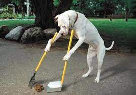 The benefits of hiring a pet waste removal company