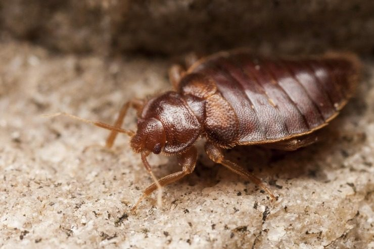 Wave Off Goodbye To Sleepless Nights By Renting The Most Effective Bed Bug Heater in Los Angeles