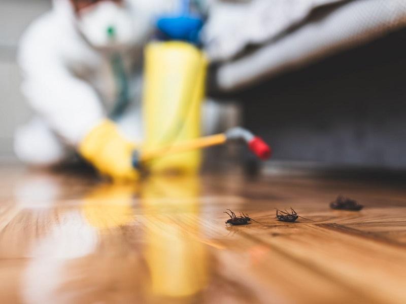 Impact Of Lockdown On Pest Control