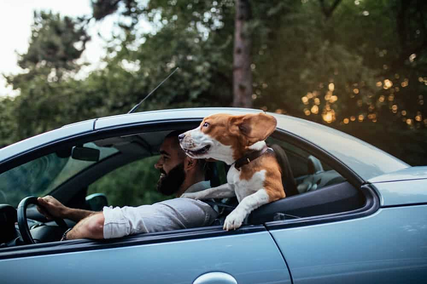 Recommended Products for A Road Travel with Dogs