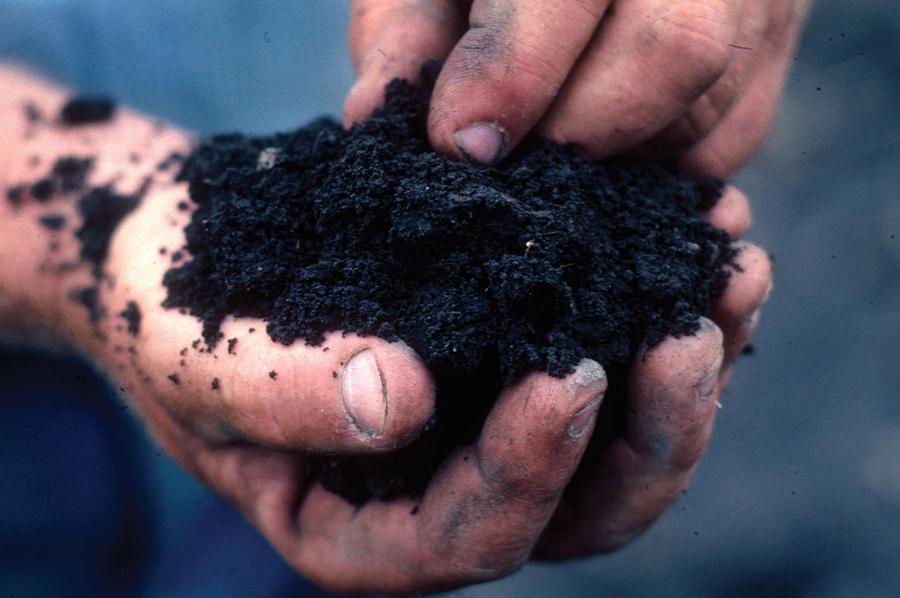Enriching Your Soil for Optimum Productivity