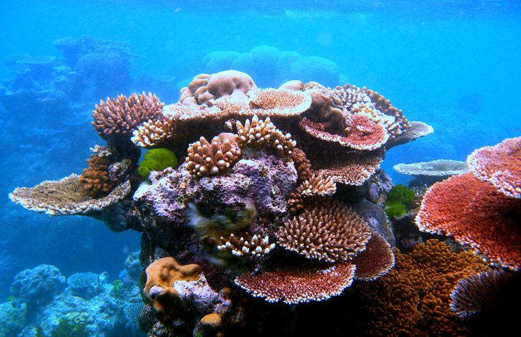 Risk Surrounding Corals and Precautions You Need to Take While Handling Them